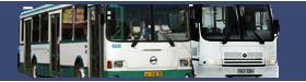 Нижегородские автобусы